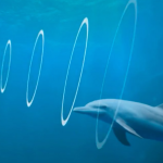 What is echolocation and which animals use it?